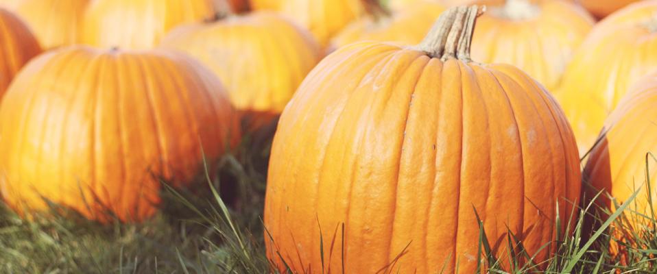 Pumpkins-Front-Page-edit